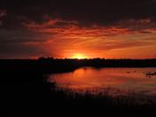 Sunsetting over Strumpshaw Fen