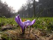 Woodland Flora..