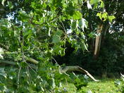 Wind damage..