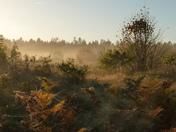 Good Morning, From misty, frosty Norfolk