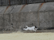 Bella in a Hurry on Gorleston Beach
