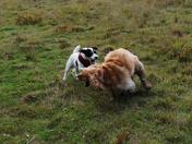 Bella and Friend at Play @ Lound Lakes