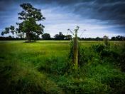 Wortham field