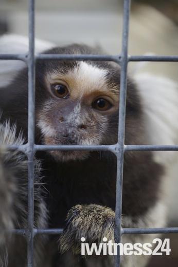 Cute behind bars
