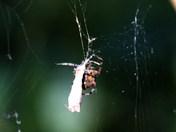 A spider from Alderfen Broad.