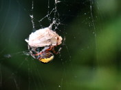 A spider from Alderfen Broad.
