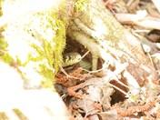 Snake Under Tree