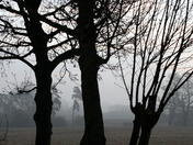 Trees in silhouette on a misty damp Norfolk morning
