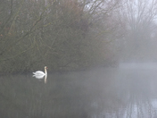 Misty morning on the River Ant