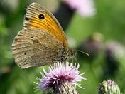 Norfolk, wildlife,