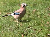 Birds in the garden!