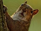 Valentines Squirrel