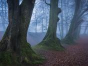 Woodbury Castle in morning mist