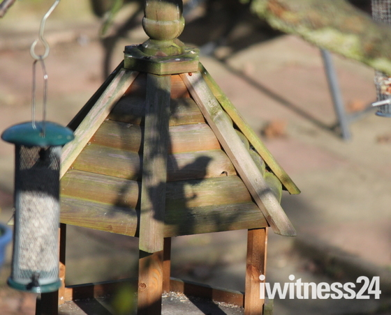 Shadow - Bird on feeder