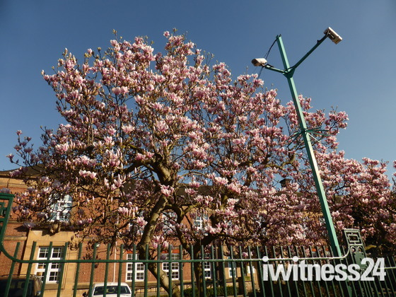 Spring is blooming on trees