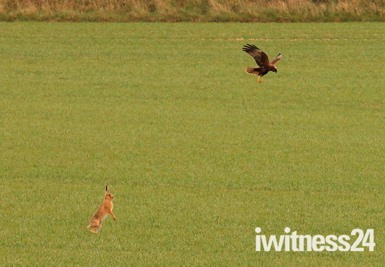 'Hare Raising Fight' Part 2 of 2 Parts