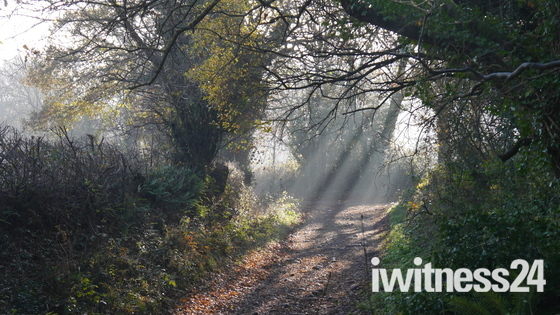 Dramatic light effects on Woodbury Common East Devon