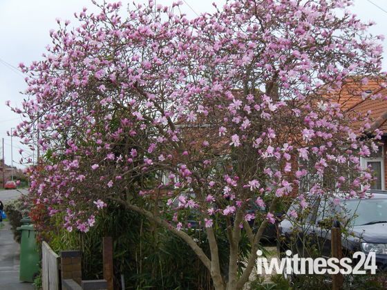 SPRING COMES TO THORPE ST.ANDREW   -  part 1