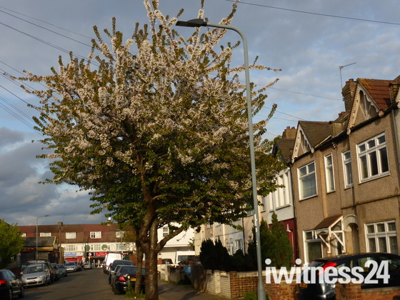 Flowery Tree in Norman Road Ilford