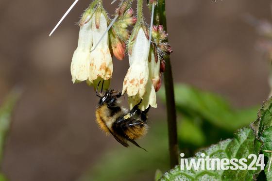 Flower Bee.