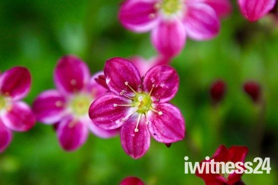 Garden Spring flora