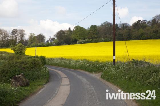 Weather,UK,Blue skies over a Rapeseed Field in Westerham Kent