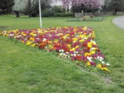 Primulas in South Park, Ilford