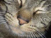 My cat Merlin