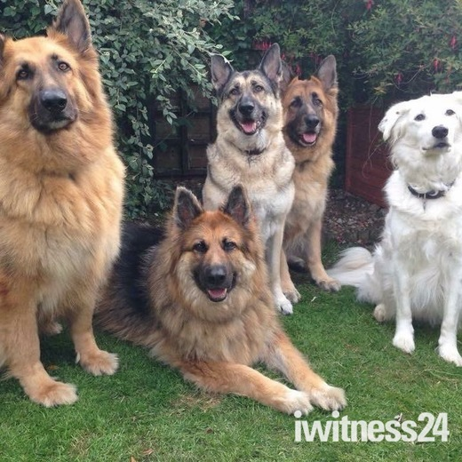 Sam, Bella, Roxie, Chas and Bob
