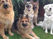 Sam, Bella, Roxie, Chas and Bob