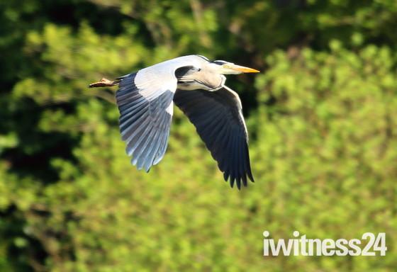 Wildlife at Fairhaven