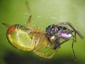 Micro Green Spider
