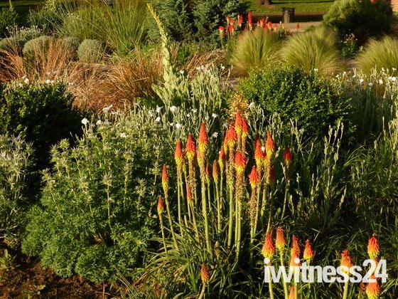The Valentines Diamond Jubilee Dry Garden