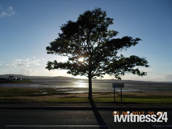 Sun shining through the tree at Exmouth Estuary