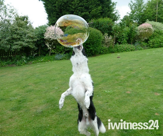 Badger bursts the bubbles.