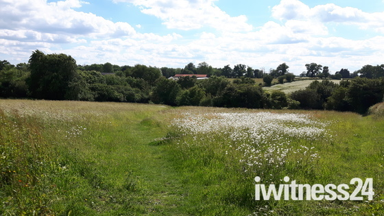 Suffolk meadow in June.