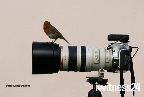 Robin perch