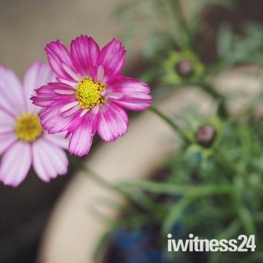 Flower Show Challenge - My Garden