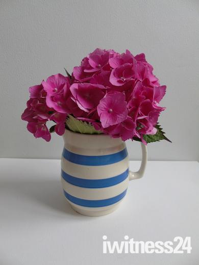 My Garden - Weston Flower Show