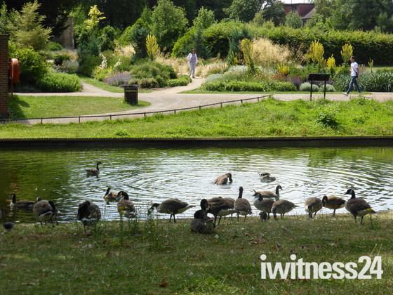 Wildlife in Valentine park Ilford