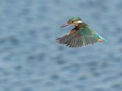 A Kingfishers World