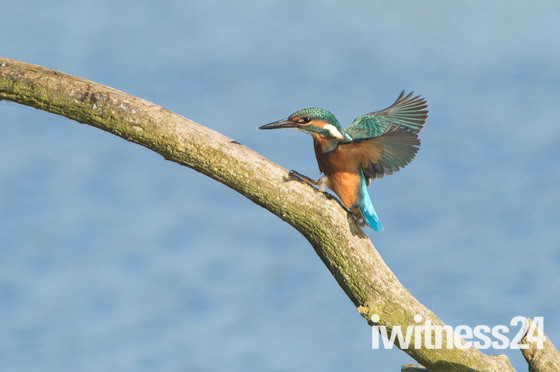 A Kingfishers World