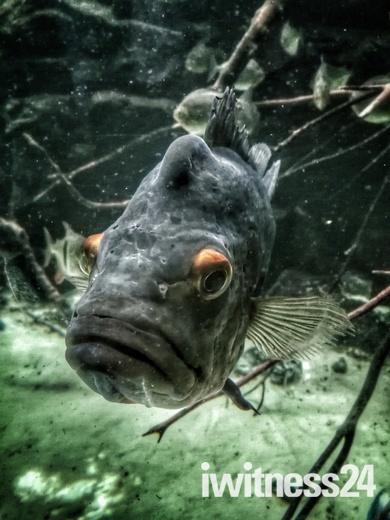 Aquarium Bristol zoo
