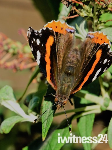 Beautiful Summer Butterfly
