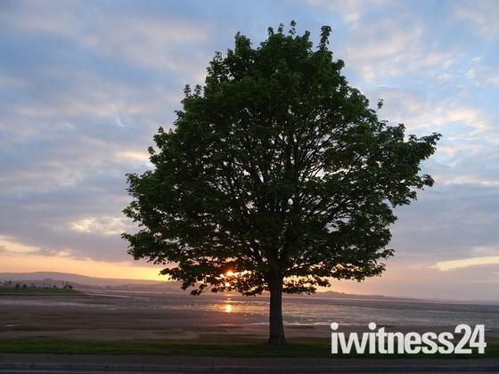 Photo Challenge - Trees