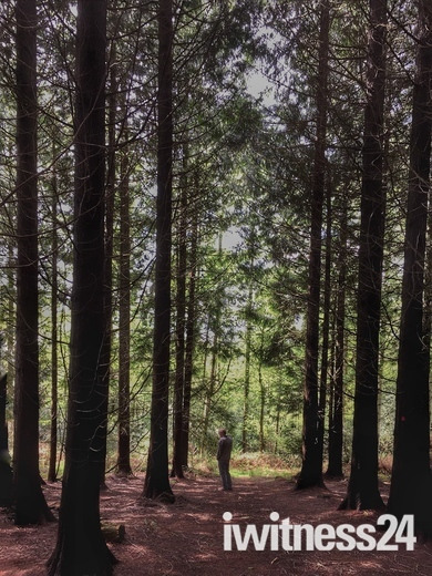 Southleigh Woods