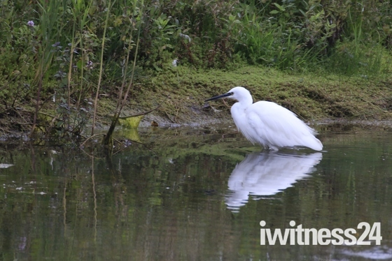 iWitters Meet Lackford Lakes 14th September 2017