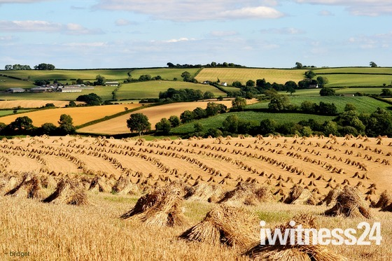 Bales and Stooks