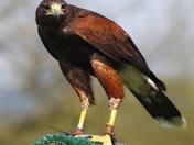 Taken at Yarak Bird Sanctuary
