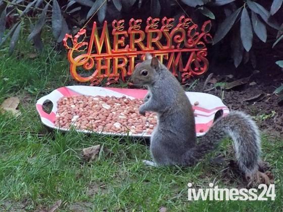CHRISTMAS TIME A SEASON OF GOODWILL